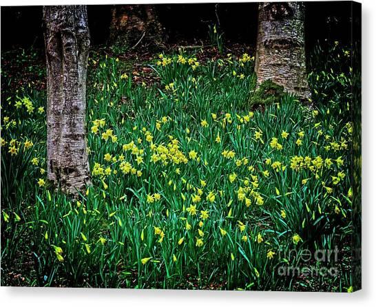 Spring Daffoldils Canvas Print