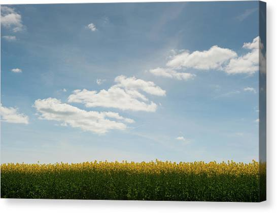 Spring Day Clouds Canvas Print