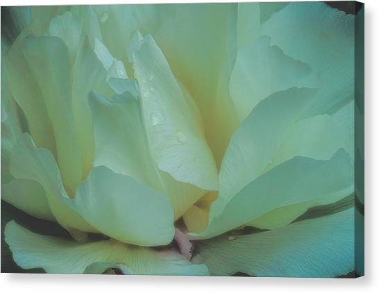 Canvas Print featuring the photograph Spring Dreams by Chris Lord