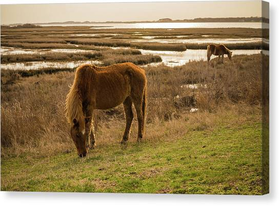 Maryland Horses Canvas Print - Spring Eats by Kristopher Schoenleber