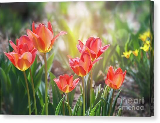Spring Favorites Canvas Print