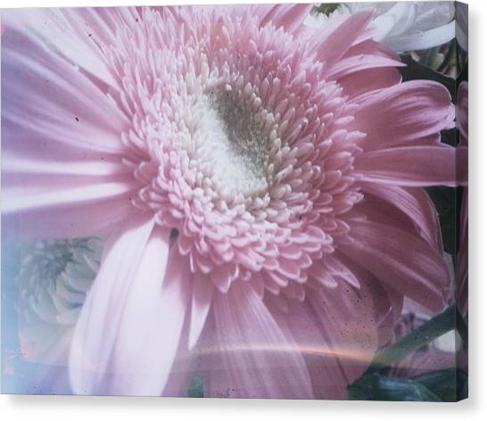 Spring Flower Canvas Print