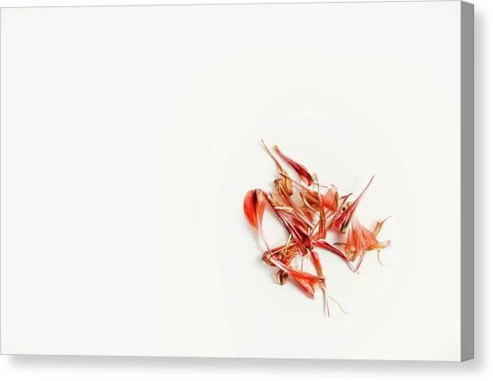 Nature Still Life Canvas Print - Spring Flower by Scott Norris