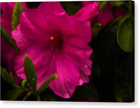 Spring Flowering Beauty - Azalea Floral Canvas Print by Barry Jones