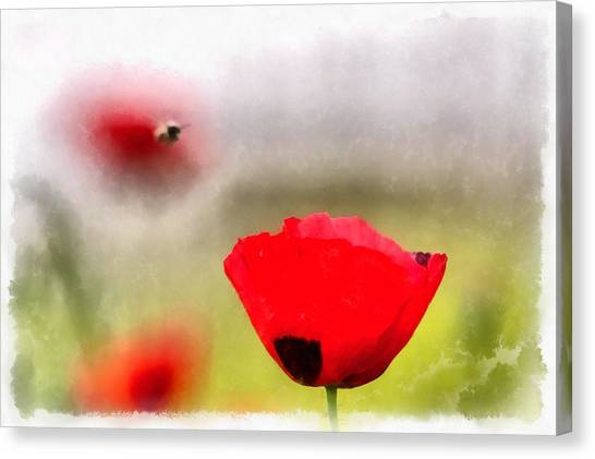Spring Flowering Poppies Canvas Print