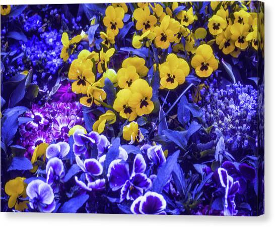Canvas Print featuring the photograph Spring Flowers - Bonn by Samuel M Purvis III