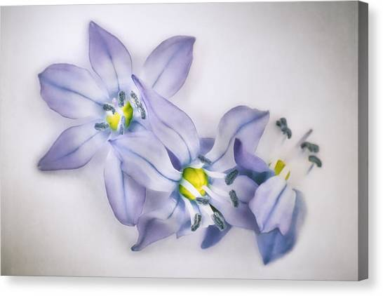 Impression Canvas Print - Spring Flowers On White by Scott Norris
