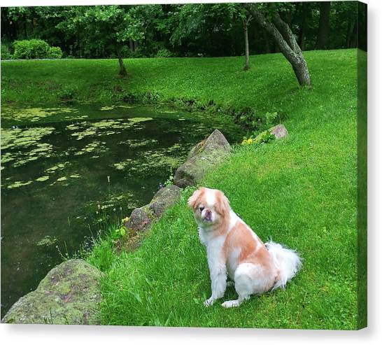 Canvas Print featuring the photograph Spring Green Japanese Chin by Roger Bester