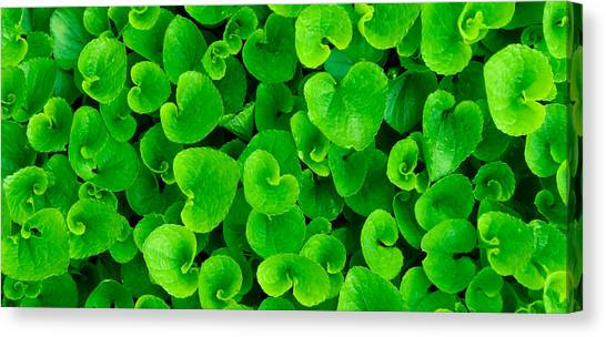 Spring Green Canvas Print by Leah Dore