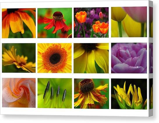 Spring Greetings Canvas Print by Juergen Roth