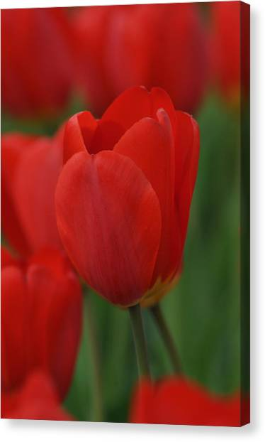 Spring Canvas Print by Gwen Allen
