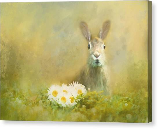 Canvas Print - Spring Hare by Amanda Lakey
