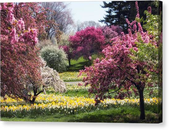 Tree Blossoms Canvas Print - Spring Has Sprung by Jessica Jenney