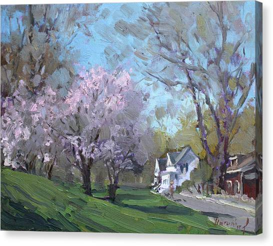 Blooming Tree Canvas Print - Spring In J C Saddington Park by Ylli Haruni