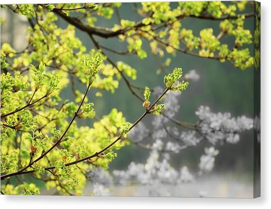 Spring In The Arboretum Canvas Print