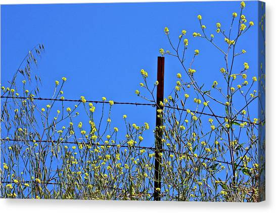 Spring In The Country Canvas Print