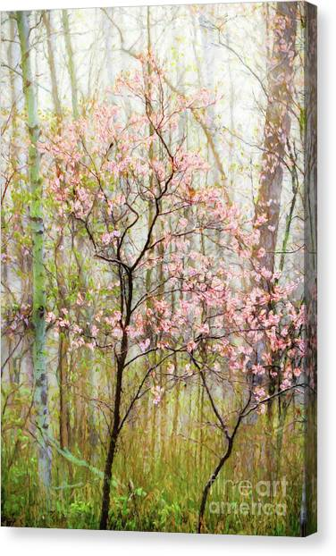 Spring In The Forest Canvas Print