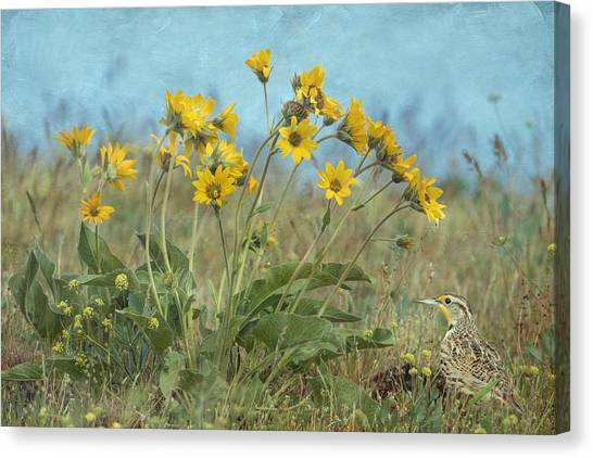 Meadowlarks Canvas Print - Spring In The Meadows by Angie Vogel