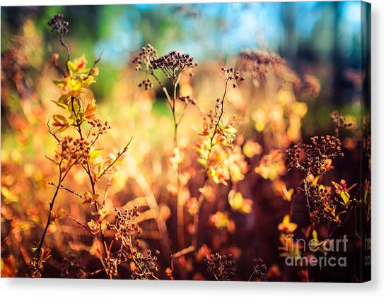 Spring Is A New Beginning Canvas Print