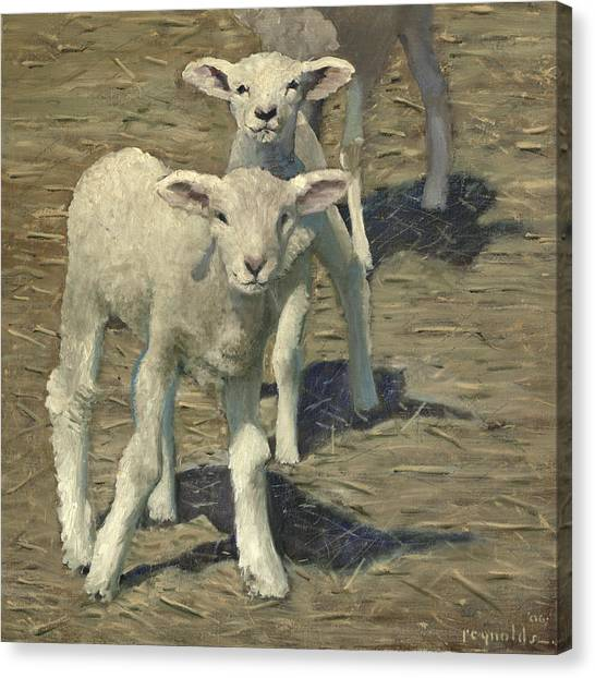 Spring Lambs Brothers Canvas Print