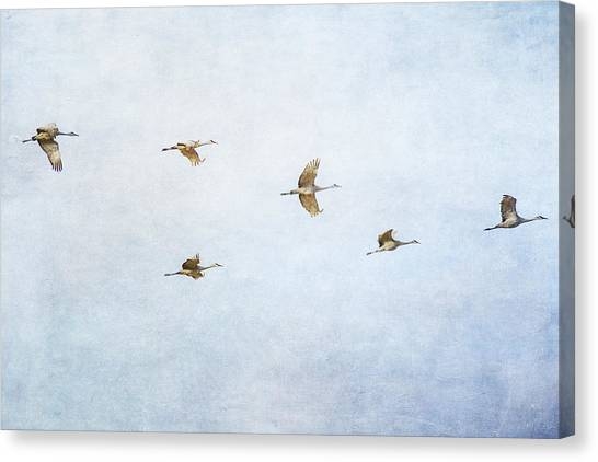 Spring Migration 4 - Textured Canvas Print
