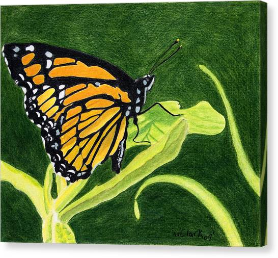 Spring Monarch Canvas Print