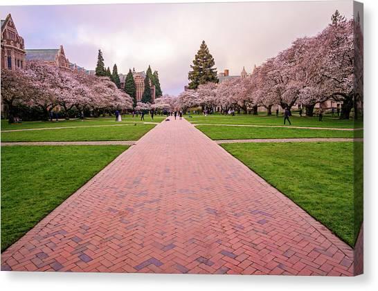 University Of Washington Canvas Print - Spring Morning At The Quad by Matt McDonald