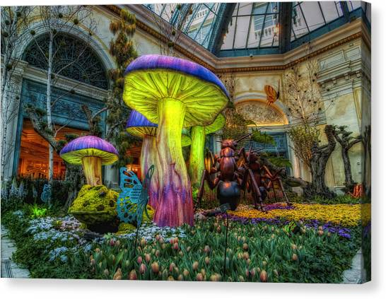 Ants Canvas Print - Spring Mushrooms by Stephen Campbell