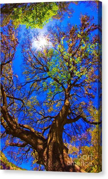 Spring Oak Canvas Print