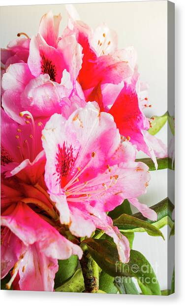 Subtle Canvas Print - Spring Of Flower Bouquets by Jorgo Photography - Wall Art Gallery