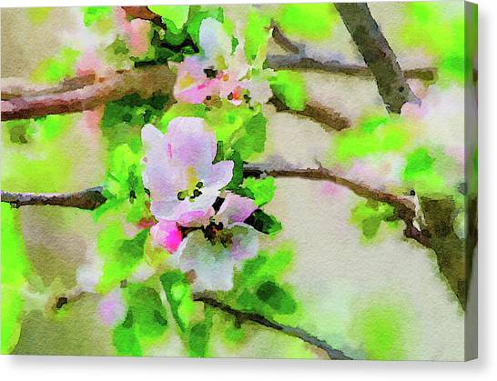 Spring On A Branch Canvas Print