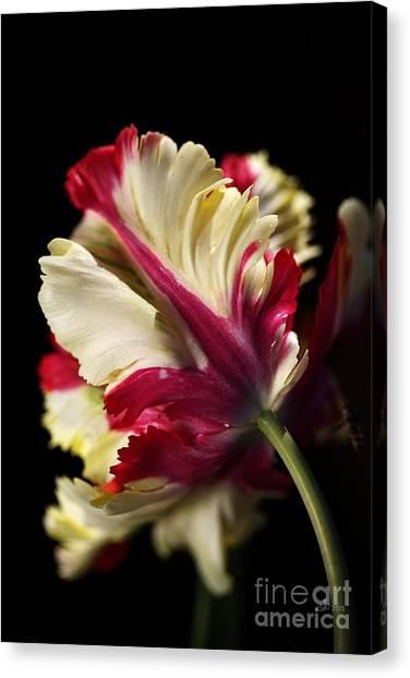 Spring Parrot Tulip Canvas Print