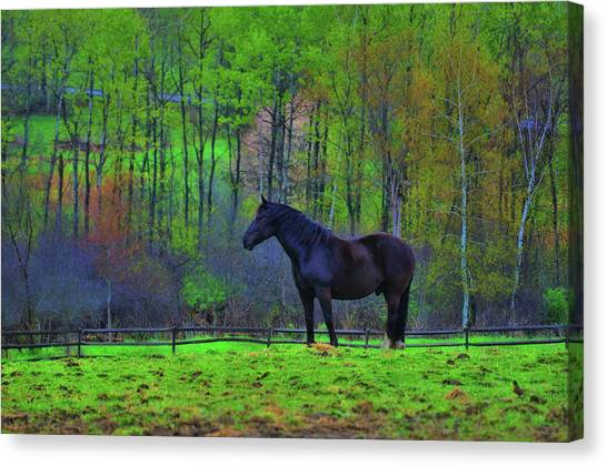 Spring Pasture Canvas Print by JAMART Photography