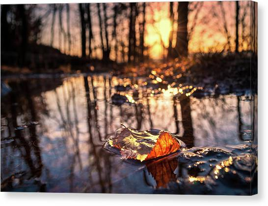 Spring Puddles Canvas Print