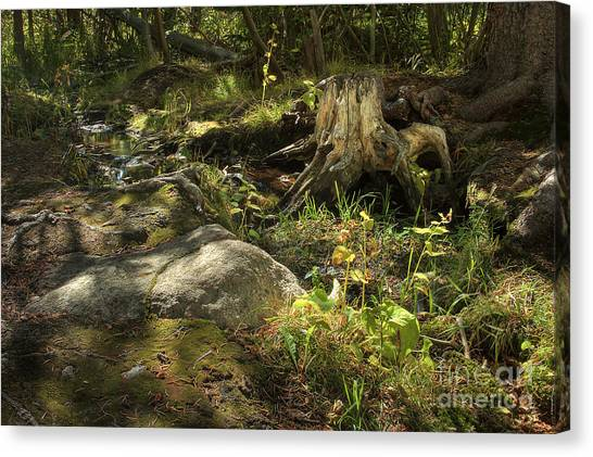 Spring Revealed Canvas Print