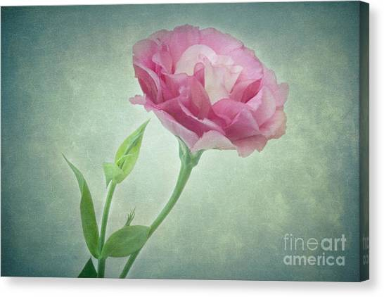 Spring Ruffles Lisianthus Visit Www.angeliniphoto.com For More Canvas Print