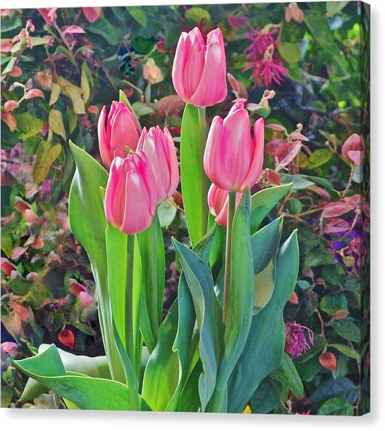 Spring Show 14 Pink Tulips  Canvas Print
