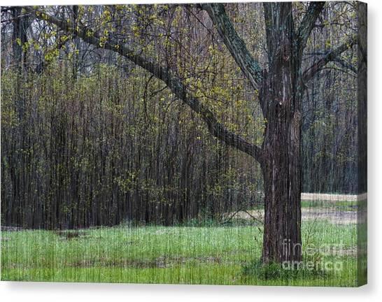 Spring Shower Canvas Print