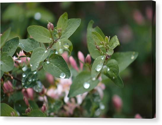 Canvas Print featuring the photograph Spring Showers 5 by Antonio Romero