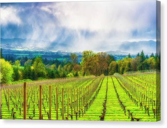 Spring Showers In The Vineyards  Canvas Print