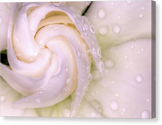 Spring Showers On The Gardenia Canvas Print by JC Findley