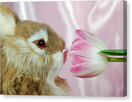 Spring Sniffer Canvas Print by Maria Dryfhout