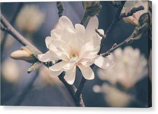 Spring Sonnet Canvas Print