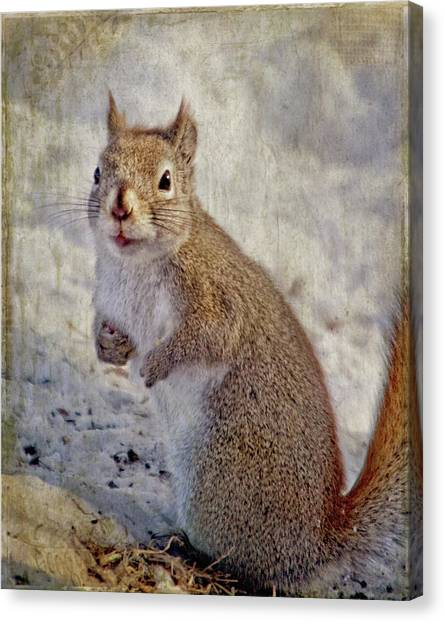 Spring Squirrel Canvas Print