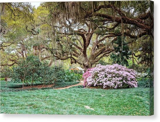 Spring Azaleas In Florida Canvas Print
