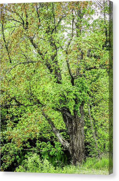 Spring Time By The River Canvas Print