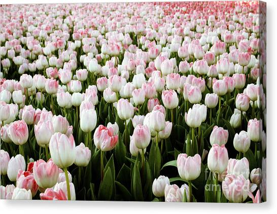 Tulip Canvas Print - Spring Tulips by Linda Woods