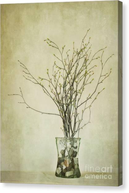 Birch Canvas Print - Spring Unfolds by Priska Wettstein