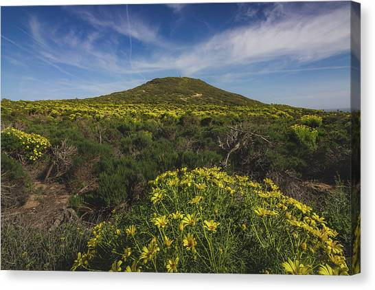 Spring Wildflowers Blooming In Malibu Canvas Print