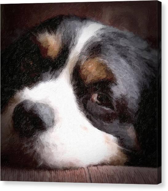 Puppies Canvas Print - Springer Spaniel by Tom Mc Nemar